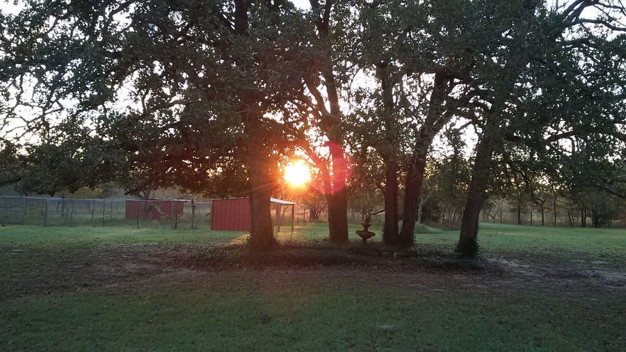"""""""Spring sunrise in Texas"""" EyeEm Selects EyeEmBestPics EyeEm Best Shots - Nature Early Rising Country Mornings Tree Plant Sun Lens Flare Growth Nature Sunset Sky Sunlight Field Sunbeam Land Beauty In Nature Grass Outdoors Tranquility Tree Trunk Summer Exploratorium EyeEmNewHere"""