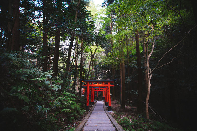 Tree Plant Forest The Way Forward Land Nature Direction Footpath Growth Tranquility Architecture Built Structure No People Travel Destinations Green Color Religion Outdoors Travel Beauty In Nature Shrine