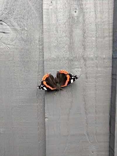 Butterfly EyeEm
