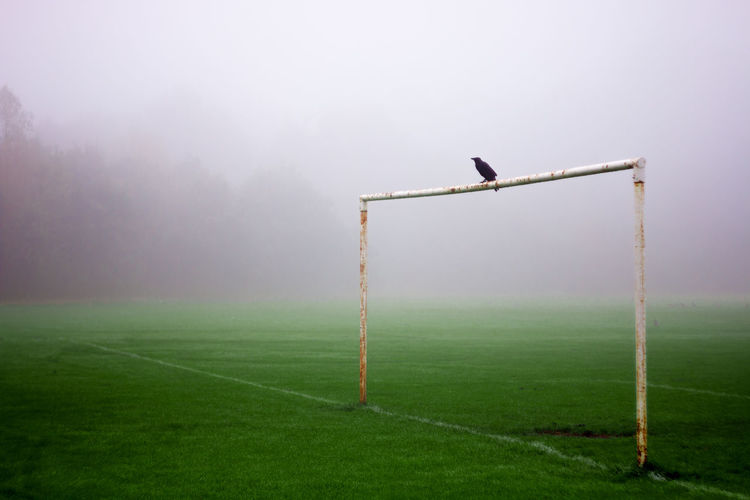 Beauty In Nature Dawn Day Field Fog Foggy Goal Post Grass Green Color Landscape Nature No People Playing Field Pole Remote Rural Scene Scenics Sky Tranquil Scene Tranquility Weather