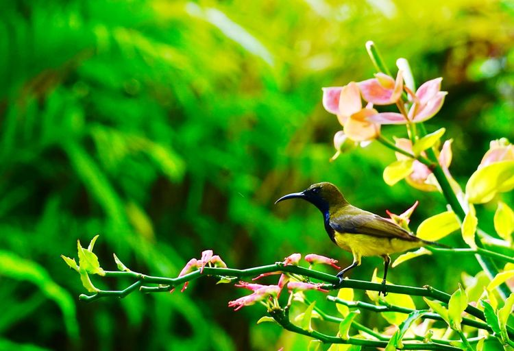 Olived Backed Sunbird. Birding Eyeem Market EyeEm Birds EyeEm Best Shots Bird Bird Photography Animal Wildlife Plant No People Beauty In Nature Outdoors Close-up Freshness Growth Day