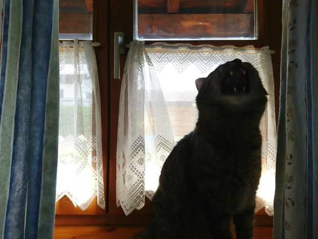 Indoors  No People Domestic Cat Pets One Animal Portrait Domestic Animals Pet Portraits Close-up Window Door Curtain Day Mammal