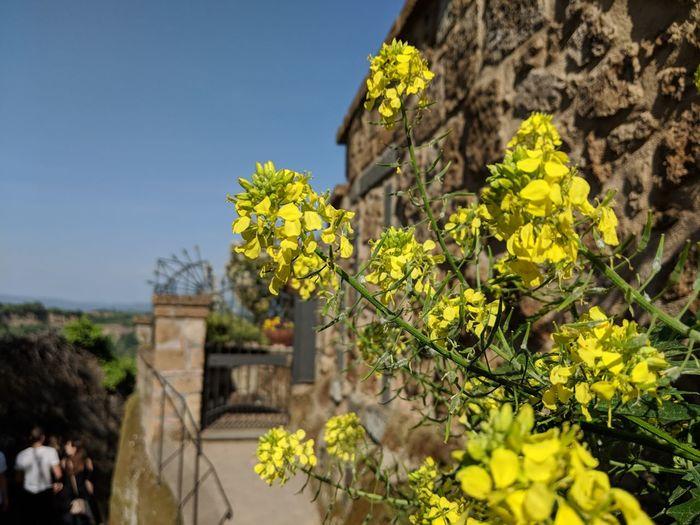 Civita di Bagnoregio Civitadibagnoregio Pixel2xl Tree Sky Architecture Plant Life Flower Head
