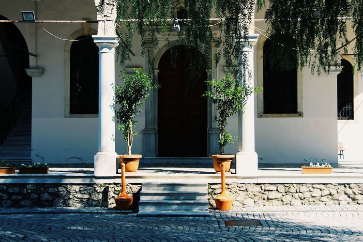 Potted plants on street by building