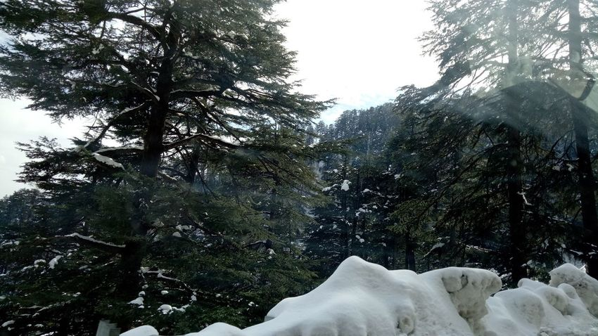 Scenics Beauty In Nature Elementary Age Growth Food And Drink Wood - Material Shimla, Nature Snow White ShimlaDiaries Snow ❄ Snow Covered Snowfall Shimla Snowing Shimla Hill Station Morning Hill ❄ Travel Destinations White Snow Hill Snowcapped Mountain Hillside Snow Relaxed Moments Portable Information Device Environment Architecture White Snow Covered Trees No People Outdoors Lifestyles People Togetherness One Person Young Adult