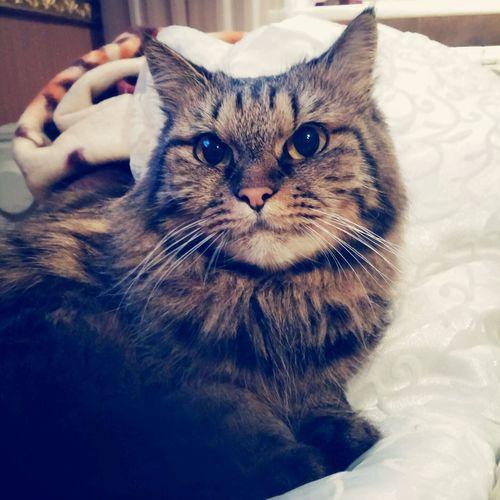Cat Cat♡ Cat😻 😚