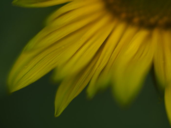 Close-up of yellow flower head