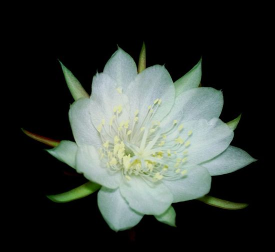 Taking Photos Flowers Light In The Darkness Nature In The Night Nature Photography Flower Photography Nature Diversities White Flower Flower