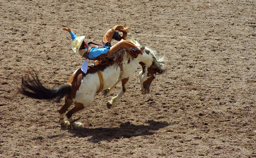 Buckaroo Cheyenne  Cheyenne Ro Cowboy Cowboys Hold On Holding On Horse Rodeo
