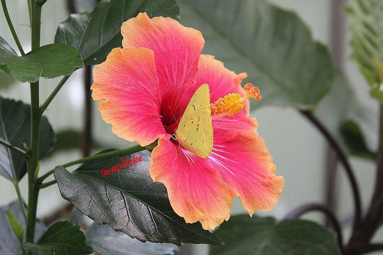 Flowerforfriends Floralperfection Butterflycatchers Flowerforfriends♡♥