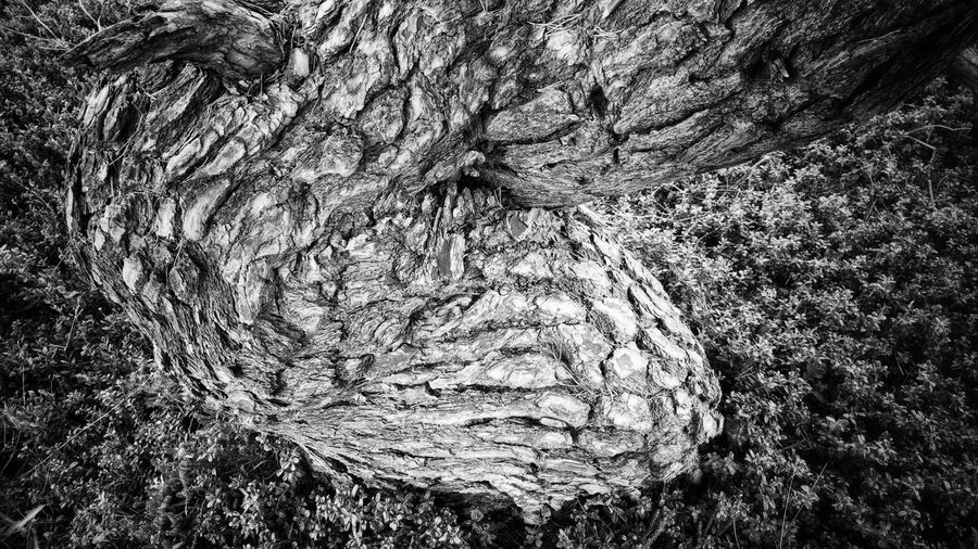 ✨Trees✨ Twenty One Pilots Full Frame Backgrounds Pattern No People Textured  Abstract Close-up Day Nature Outdoors Low Angle View Growth Beauty In Nature Perspectives On Nature Black&white From My Point Of View Bnw_friday_eyeemchallenge Eyeem Market Shadows & Lights Bnw_shadows Black And White Collection  Black And White Photography Black And White Bnw_tree Pine Tree Be. Ready. Black And White Friday EyeEmNewHere EyeEm Ready   AI Now An Eye For Travel Go Higher This Is Aging Visual Creativity Focus On The Story #FREIHEITBERLIN The Great Outdoors - 2018 EyeEm Awards The Creative - 2018 EyeEm Awards Creative Space