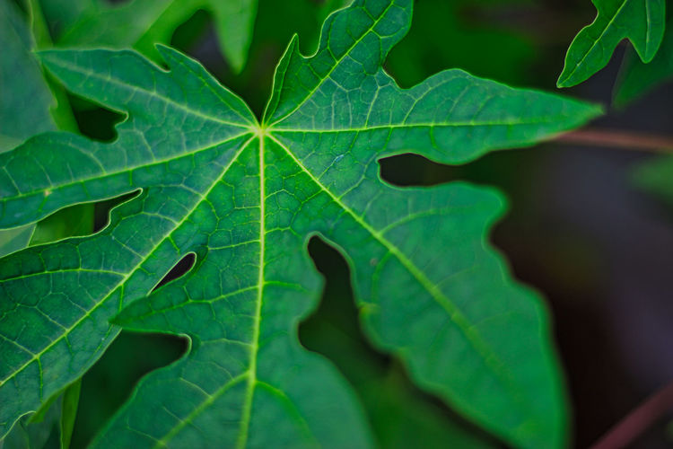 Full frame shot of green leaves
