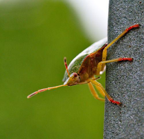 Wanze Bug Macro