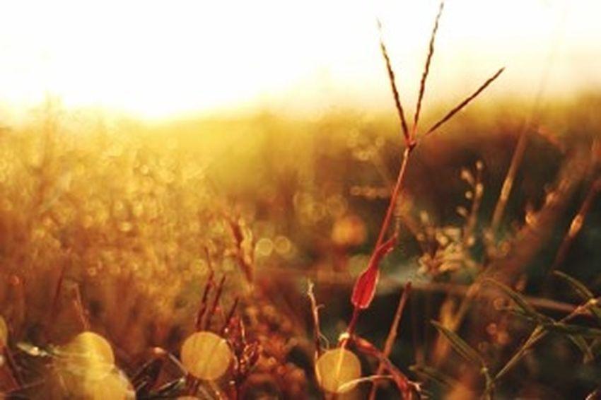 写真練習中 秋 きらきら✨雑草の輝き。秋の風景 朝焼け 朝陽