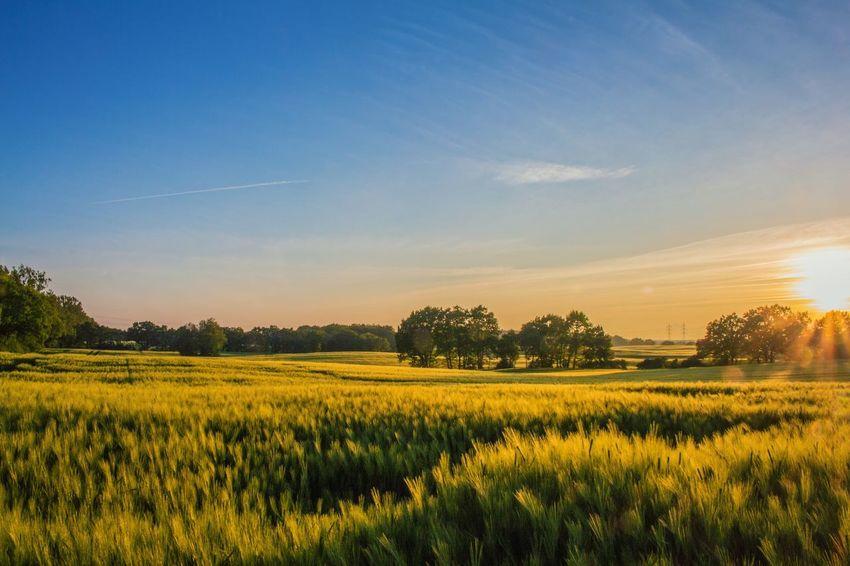 The Traveler - 2015 EyeEm Awards Canon Germany EOS700D Landscape Gerstenfeld Summer Norddeutschland Mecklenburg-Vorpommern Mecklenburg