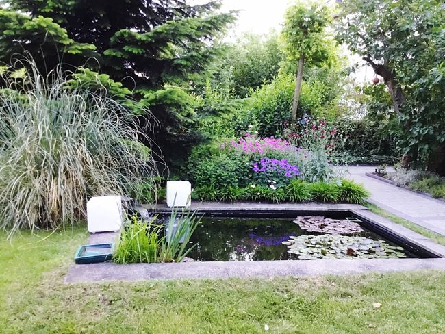 Garden pond Gardening Pond Pool Water Garden Photography Plant Nature Tree Outdoors Growth Grass Flower Beauty In Nature