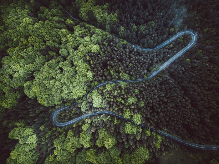 Aerial view of road by trees in forest