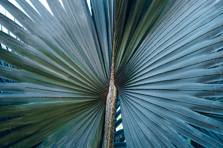 Green Nature Palm Leaf Palm Tree Naturelovers Pattern Texture Tropic