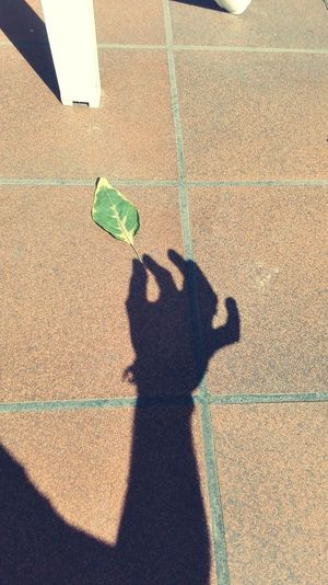 Fulla Nature Photography That's Me! Nature_perfection Sombres Shadows & Lights Shadow Leaves🌿 Leaves_collection Leaves Only Leaves Myhand Natural Beauty