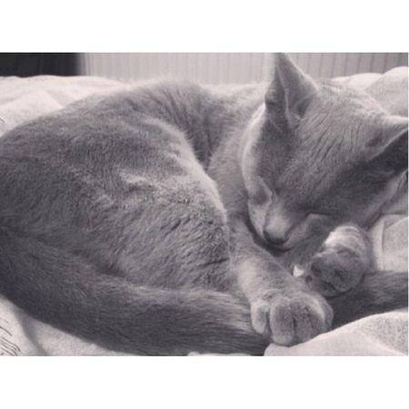 My Cat Sweet Sleepy Love <3 #my #cute #cat #love #russian #cat #the #best ????