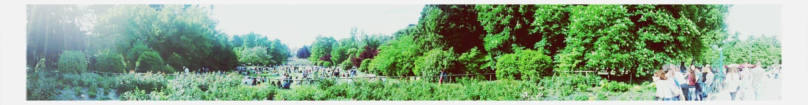 Parco Sempione Landscape