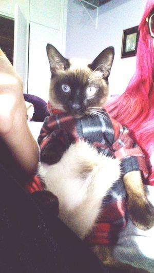 Kitty Cat Bartholomew