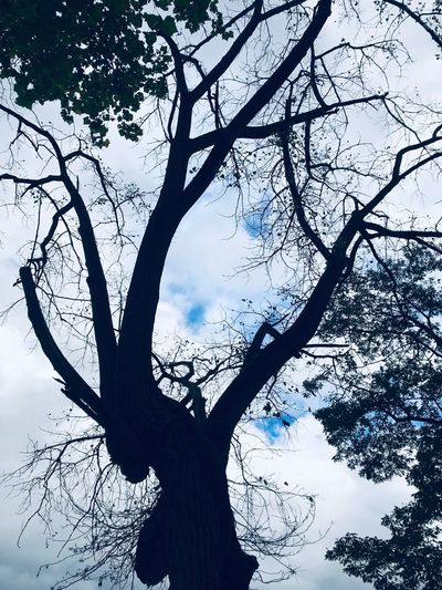 River trees Tree Plant Branch Sky Low Angle View Nature Growth Silhouette Day Tranquility No People Cloud - Sky Beauty In Nature Outdoors Tree Trunk Trunk Scenics - Nature Bare Tree Tranquil Scene Single Tree
