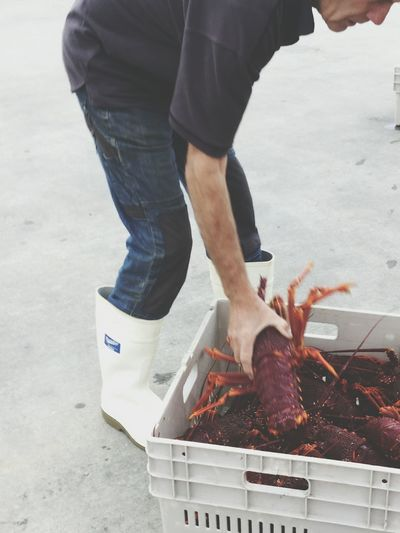 Enjoy The New Normal Lobsters Fisherman Apollo Bay Everymorning Daily Life Pescatore Aragosta Pesca