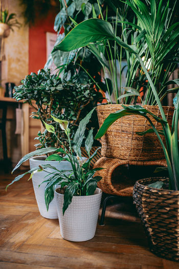 Potted plants in basket on table
