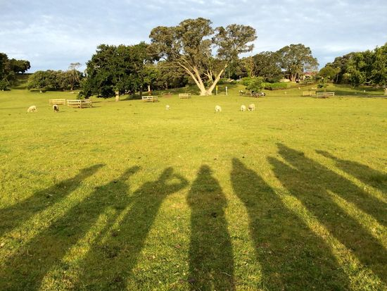 Cornwall Park Scavenger Hunt IPS2015Trees IPhoneography Trees Spring Shadow Silhouette