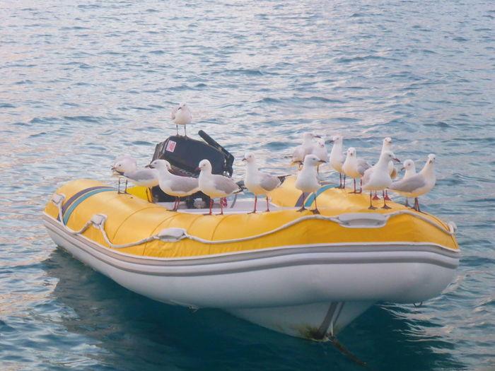 Water Nautical Vessel Sea Sailing Luxury Regatta Yachting Yacht Sailing Ship Rudder Boat Captain