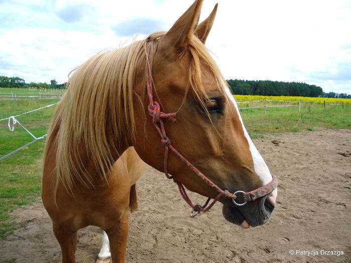 Horse Animal Nature Nature Photography Horse Photography  Horselife Horse Riding