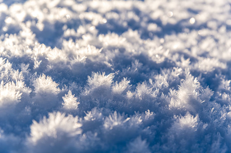 Scenic view of snow covered plants