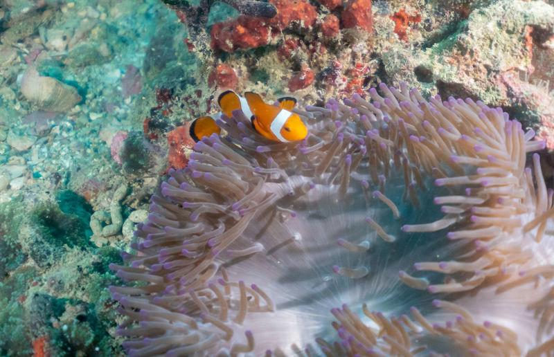 Found Nemo in