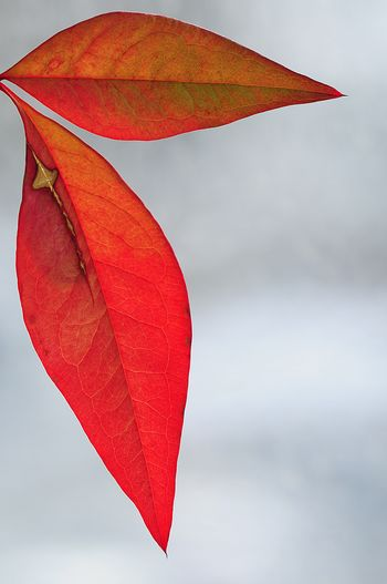 Close-up of red umbrella against sky