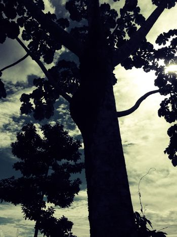 árbol Tree Shadow Outdoors Traveling No People Nature Light And Shadow No Idea