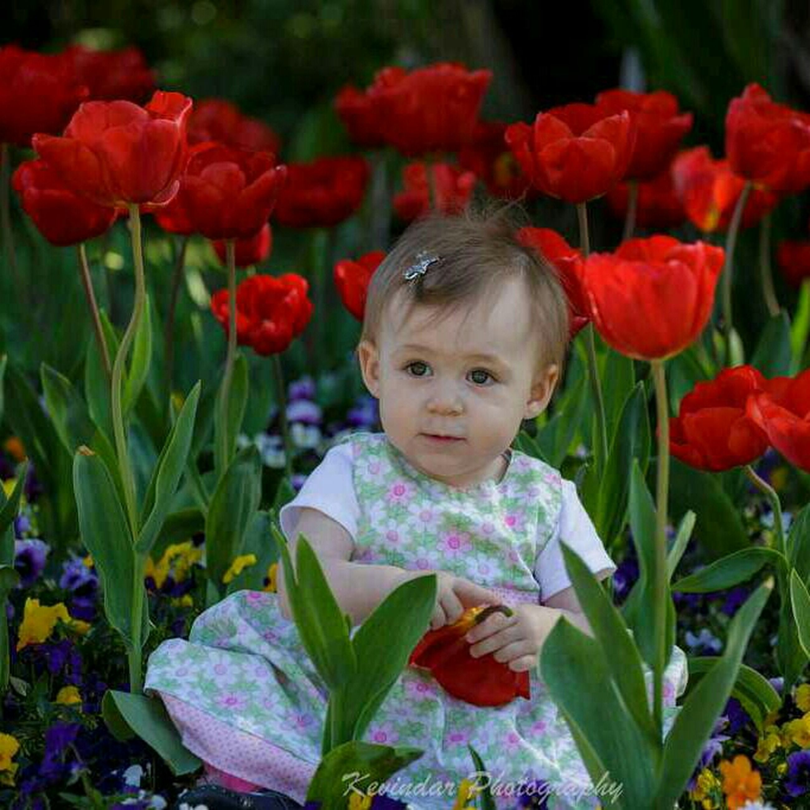 flower, fragility, freshness, childhood, growth, petal, red, flower head, field, plant, tulip, cute, innocence, elementary age, nature, blooming, focus on foreground, beauty in nature, park - man made space, close-up