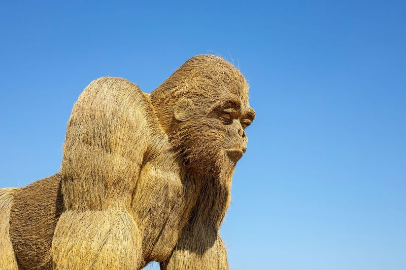 Gorilla Sculpture Park Scarecrow Gorilla Sculpture A Sculpture Made Of Straw Sculpture Garden Sculpture Art Clear Sky Sky Blue Low Angle View Day Nature No People Outdoors Art And Craft