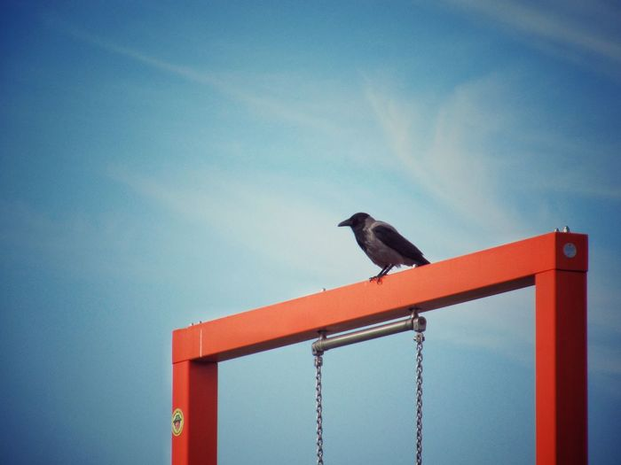 Bird Animal Themes One Animal Low Angle View No People Outdoors Sky Day Nebelkrähe Corvus Corone Hooded Crow Hoodiecrow Orange And Blue IGA Berlin 2017 Berlin