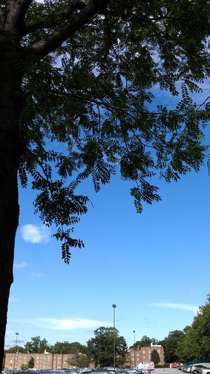 taken with HTC Sensation Htc Sensation Tree