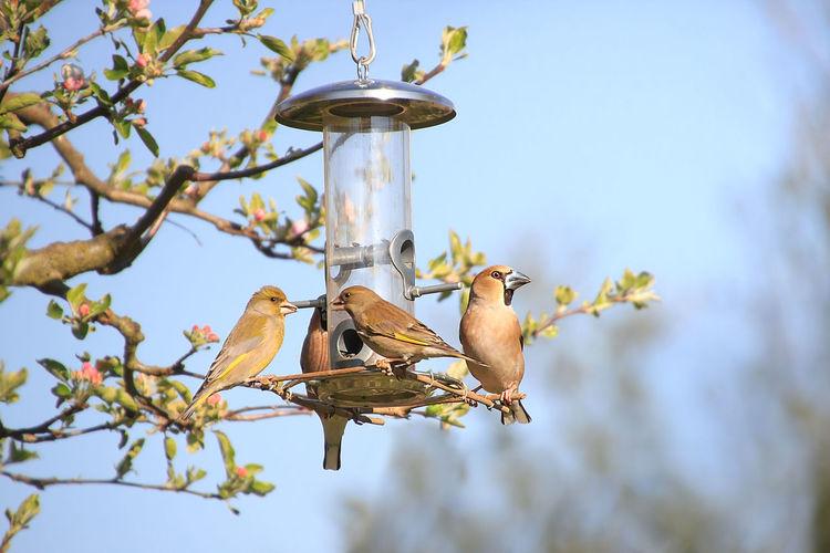 many Birds at