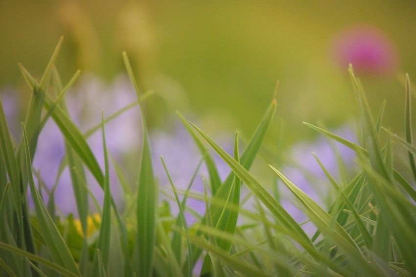 The grass is always greener on the other side. Cause that's where I let my dog poop. 🐶 Tadaa Community | Nature | TheMinimals (less Edit Juxt Photography) | P510 | Green | Nature_collection | Depth Of Field | Bokeh | My Best Photo 2015 | EyeEm Best Shots - Nature The Great Outdoors