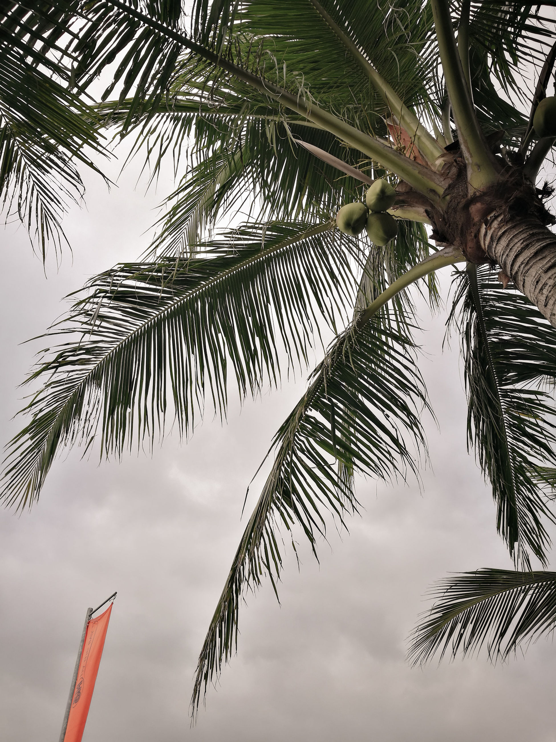 tree, tropical climate, palm tree, plant, sky, palm leaf, growth, low angle view, leaf, nature, no people, cloud - sky, beauty in nature, day, tranquility, branch, outdoors, plant part, tree trunk, trunk, coconut palm tree, tropical tree