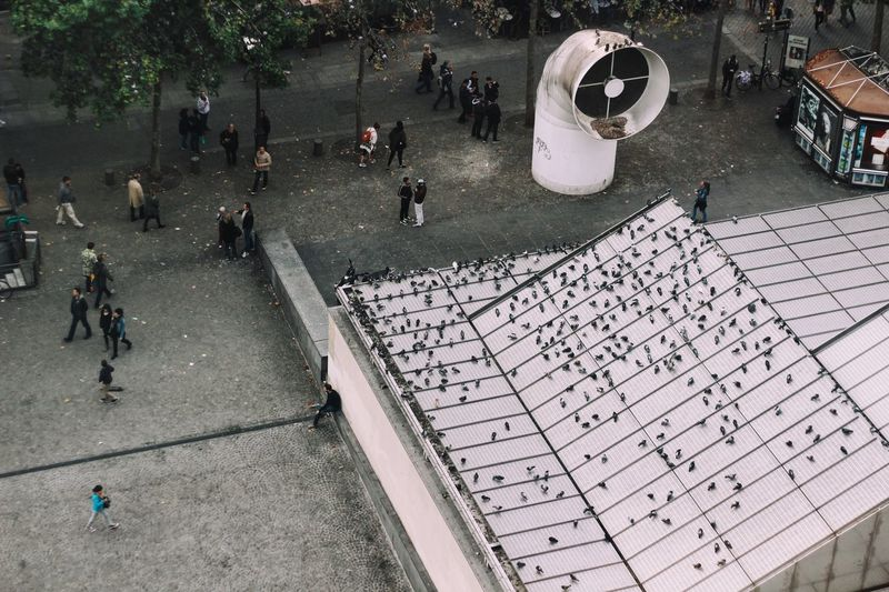High Angle View Of Birds On Roof By People