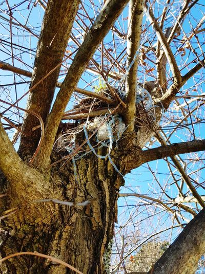 nid d'oiseaux plastique Birds Recuperation Plastic Pollution End Plastic Pollution Tree Branch Tree Trunk Flower Sky Close-up