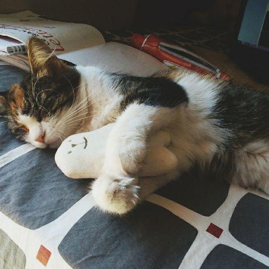 Kitten Cuddles Cute Cute Pets Puppet Sweet♡ Sleep