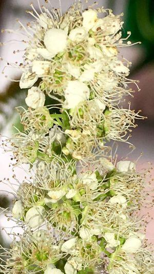 Blumen *~* Blumenpracht🌺🍃 Blumen
