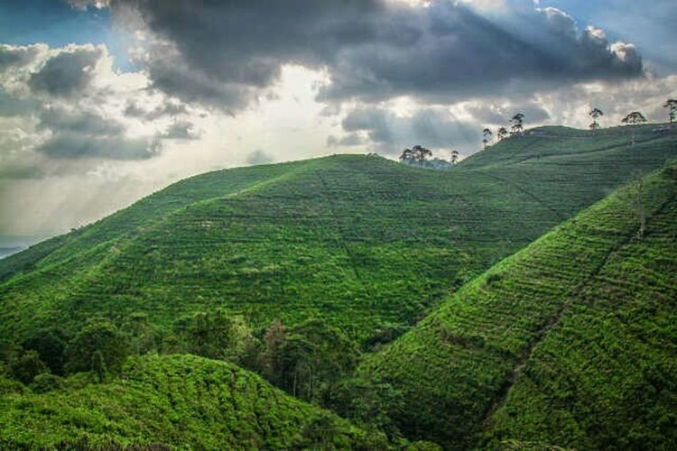 Green Enjoying Life Creative Light And Shadow Flipphotography Landscape_photography Indonesiantraveler Canon5Dmk3 Streetphotography Clouds And Sky Canonindonesia Canonphotography