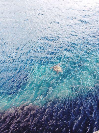 Sea Turtle Tokyo,Japan Hachijo Hachijo-island Blue Sea