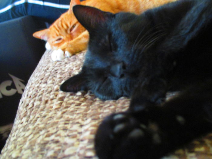 Band Of Brothers Black And Red Cat Cat Lovers Catlovers Cats Cat♡ Couching Cat Cute Cats My Lovely Jacky My Lovely Jimmy Sleeping Cat Tired Cat Tired Cats Two Cats
